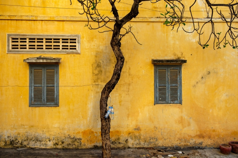 A barren tree on a yellow wall, in Wat Langka, in Phnom Penh, Cambodia.