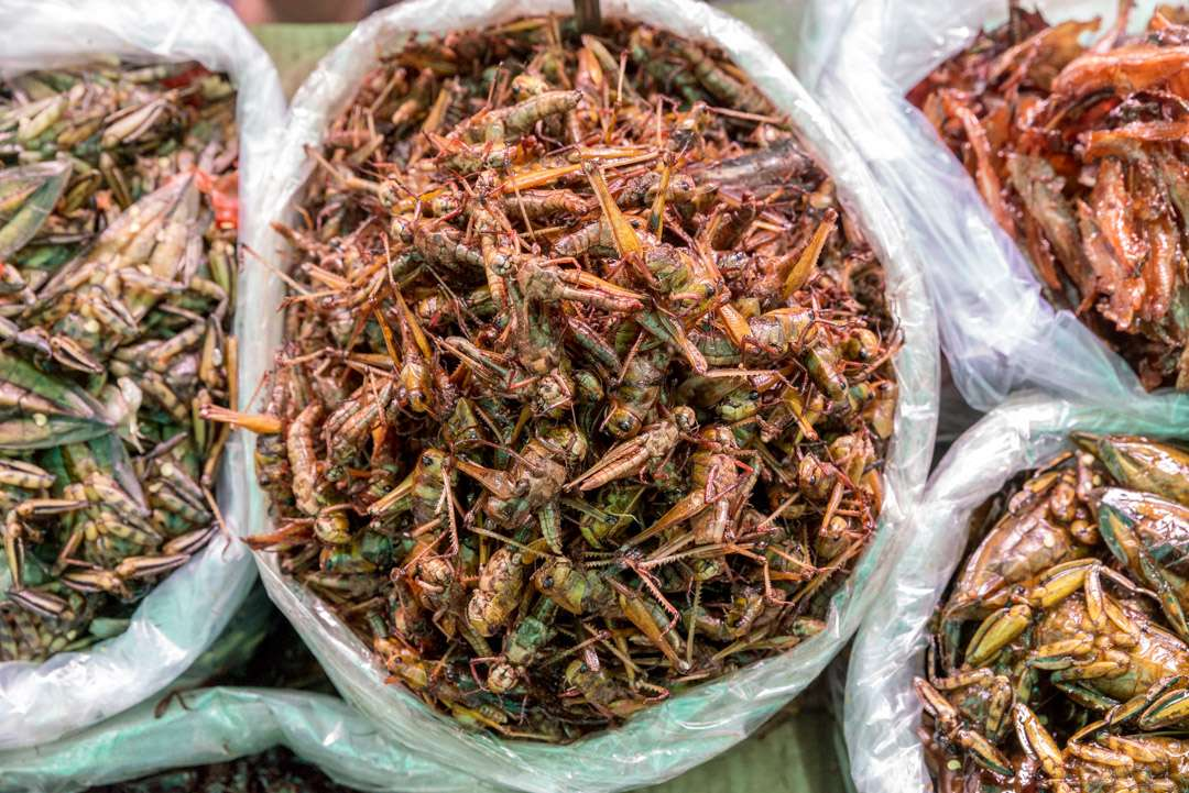 A photo of crickets to be eaten as snacks, in Thailand.